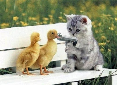 Kitten Ducks Gun