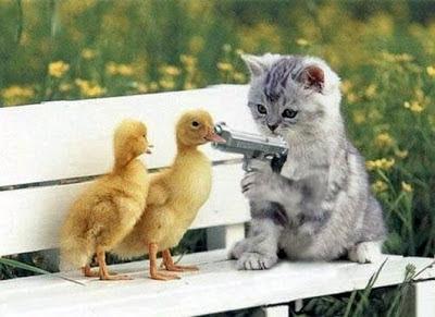 Kitten Ducks Gun