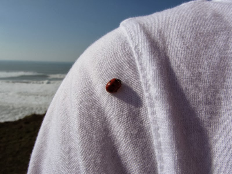 lady bird on t-shirt