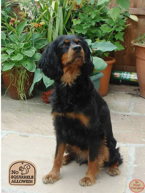 Molly The Wally in the garden.