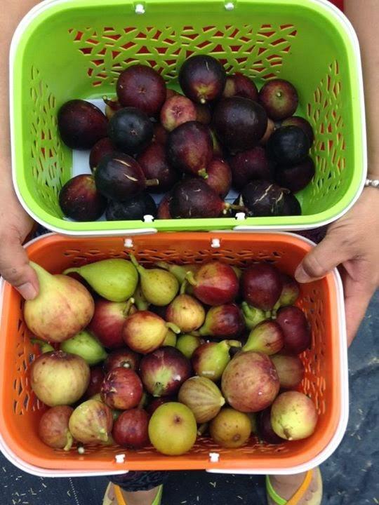 Figs : Balearic