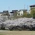 Printemps à Kourakuen au Japon