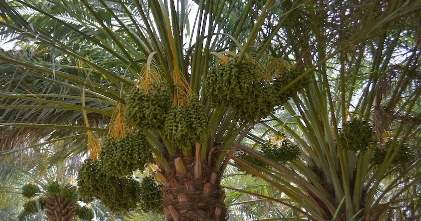 Expat Bob Life In Uae Al Ain Garden City