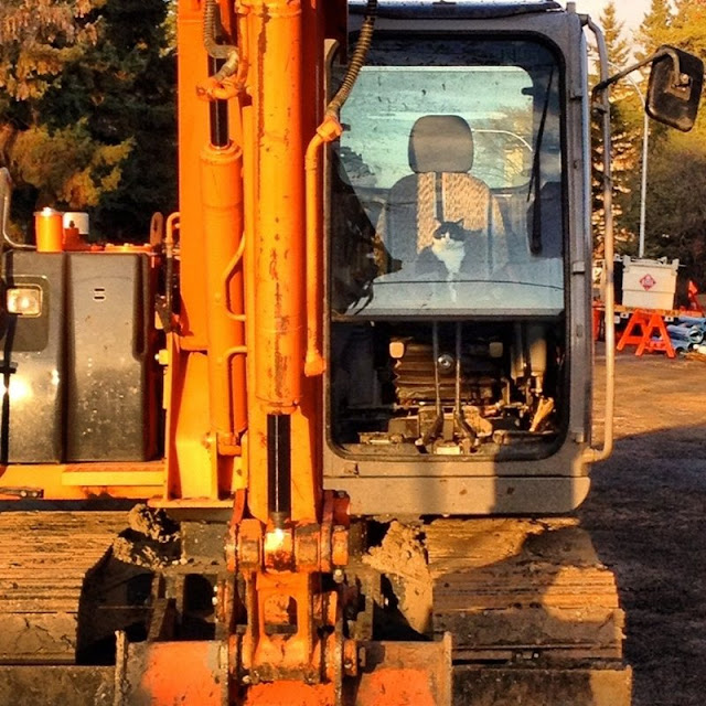 funny cats pictures, cat in excavator