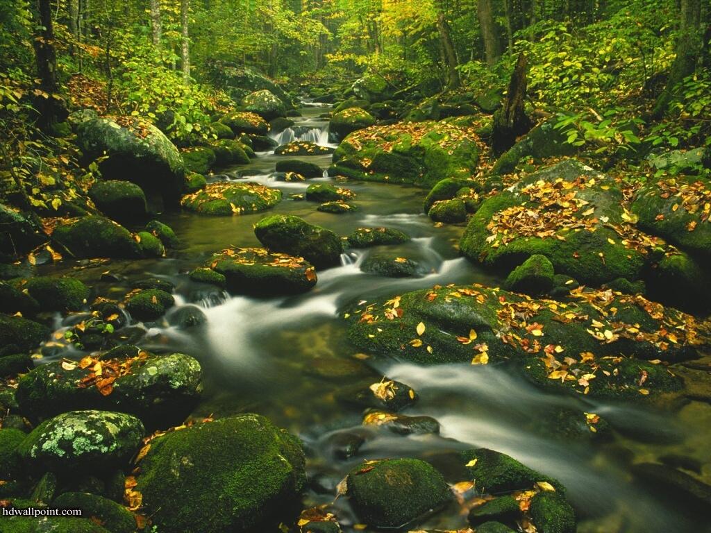 http://3.bp.blogspot.com/-wo5jcaaDe0c/Tk3tfh_MK0I/AAAAAAAAAW4/mztJ7PFcqQo/s1600/nature+wallpapers.jpg