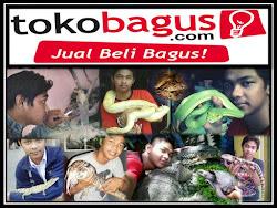 Daftar Reptile di Tokobagus