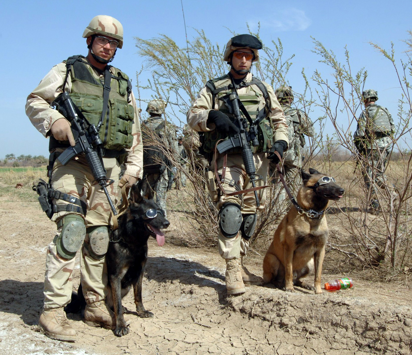 War Dogs | All About Dogs