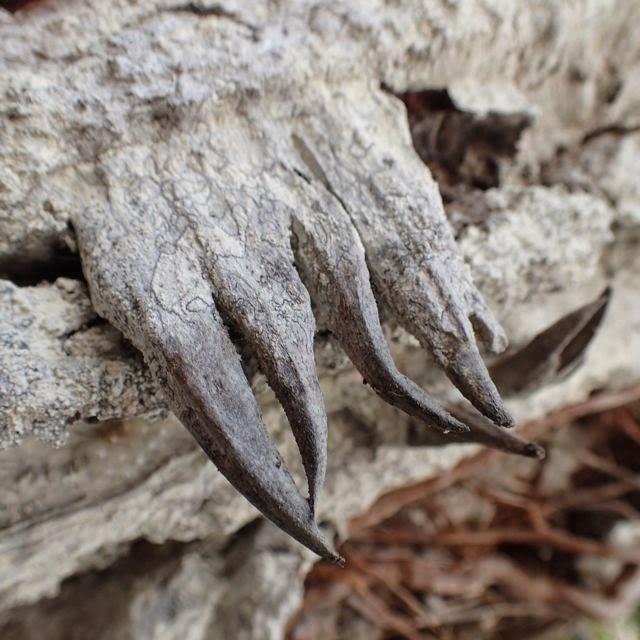 playa suecas evil tree thorns ilsa contadora las perlas panama