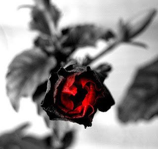 gothic rose give blood donation