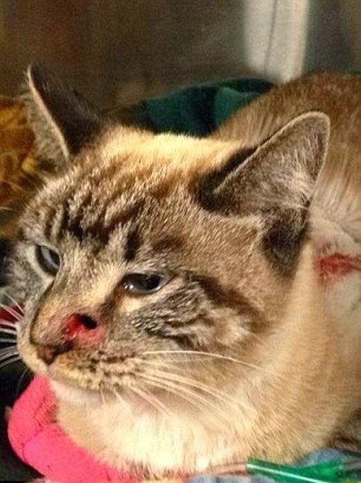 Gato atravesado por una flecha