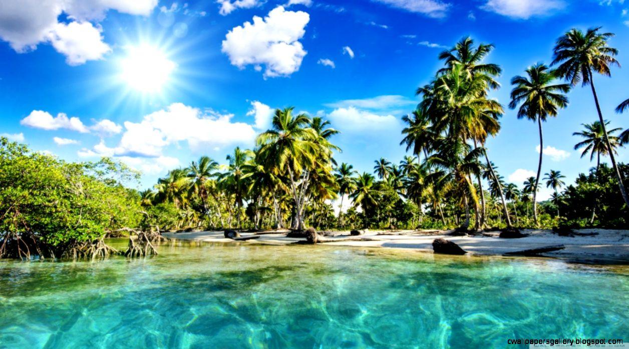 Tropics Palm Trees Sun Beach HD desktop wallpaper  High