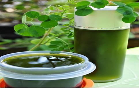 Kelor herbal organik kaya gizi kaya vitamin | Super nutrisi superfood | Solusi malnutrisi | Kelor makanan obat , menyembuhkan berbagai macam   penyakit secara alami , anti oksidan tinggi, praktis, murah, aman dan menyehatkan