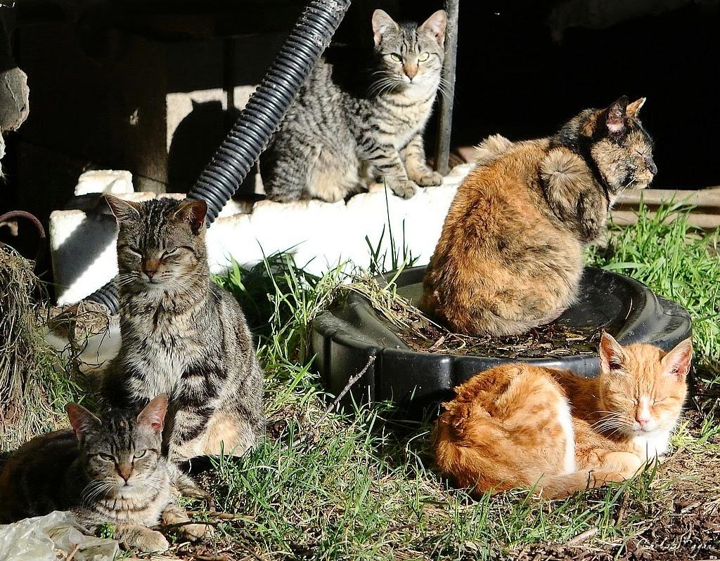 5 random feral cats
