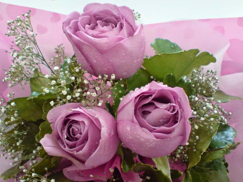 three-purple-rose-for-my-sweet-heart