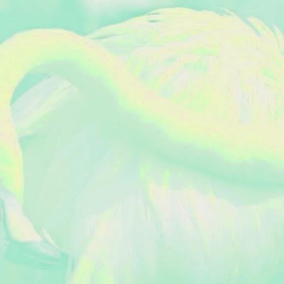 rustie - raptor