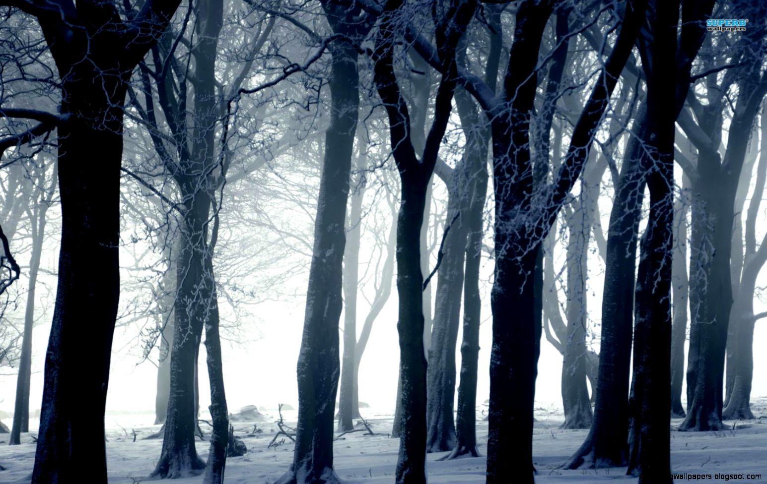 dark winter forest amazing wallpapers