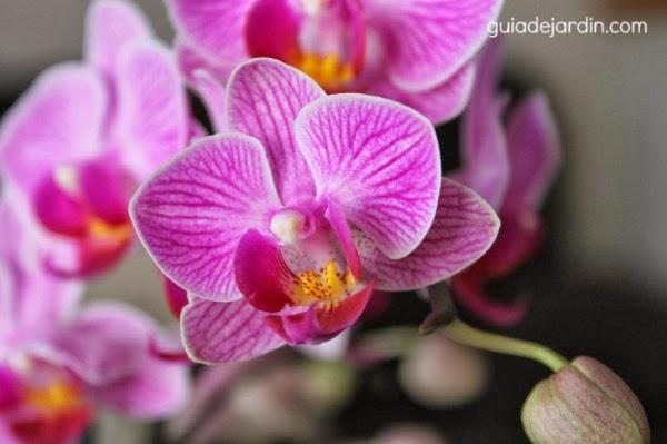 Orquídea en el interior de casa