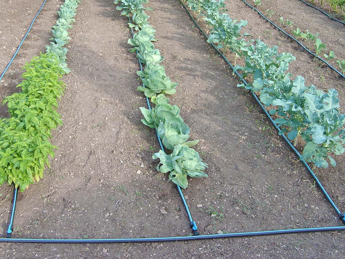 Terraxchange - Irrigazione giardino fai da te ...