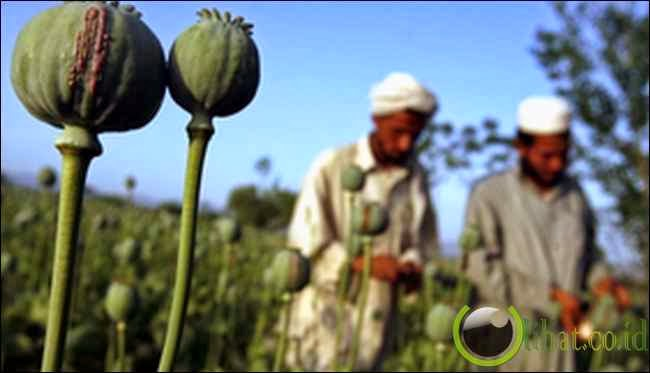 Afghanistan - Drugs!