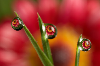 flower on a dewdrop photography