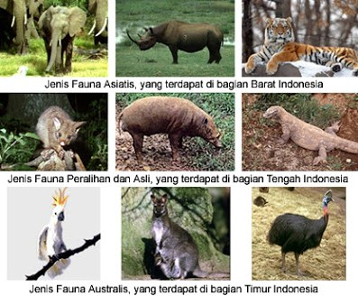 Keunikan Keanekaragaman Hayati indonesia