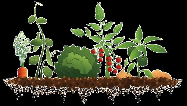 horta e jardim juntos:Achas que épossível trazer o campo para a cidade? Queres estar em