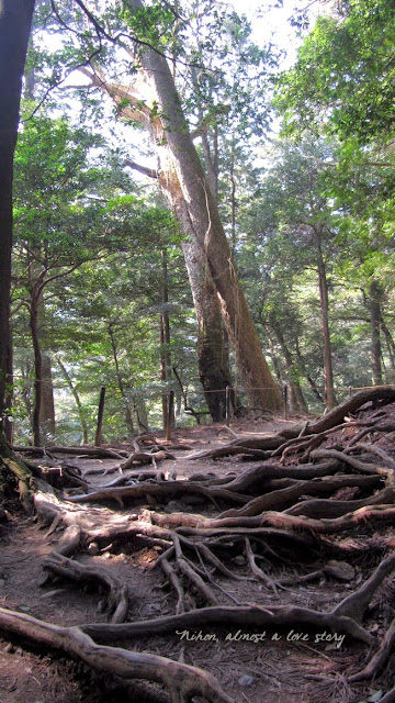 Forest between Kibune and Kurama