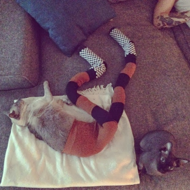cats wearing tights 2