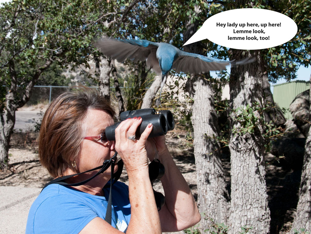 Follow The Sykes Birds 2011 Route West Part 2 Carson