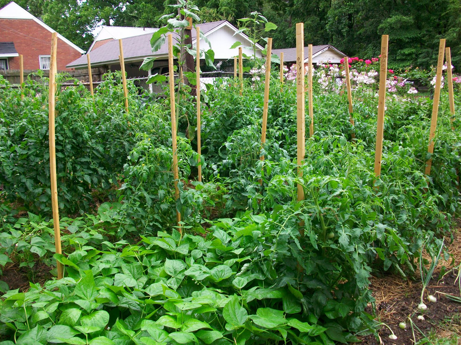 Athens Ga Farm Garden By Owner Craigslist Autos Post