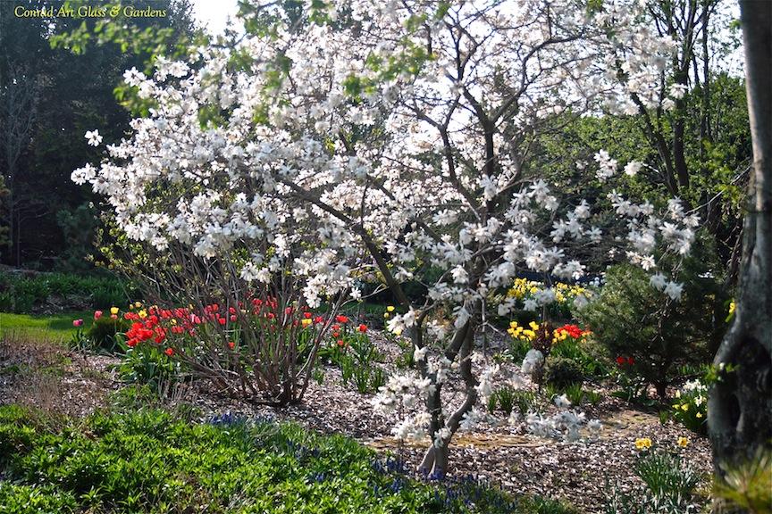conrad art glass gardens magnolias. Black Bedroom Furniture Sets. Home Design Ideas