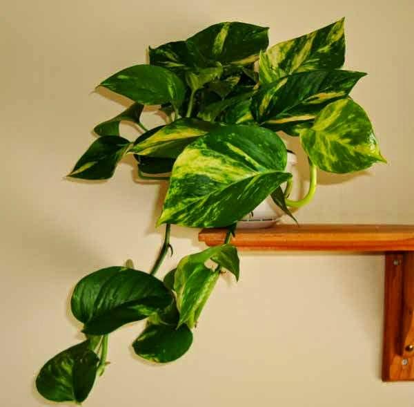 tanaman hias gantung minimalis