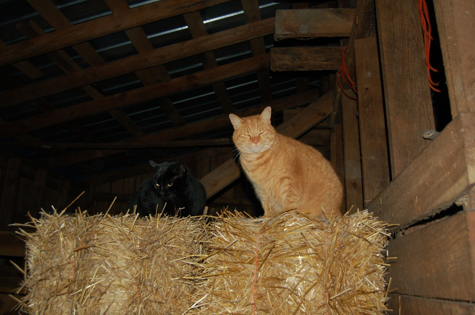 the care and feeding of barn cats   timber creek farm