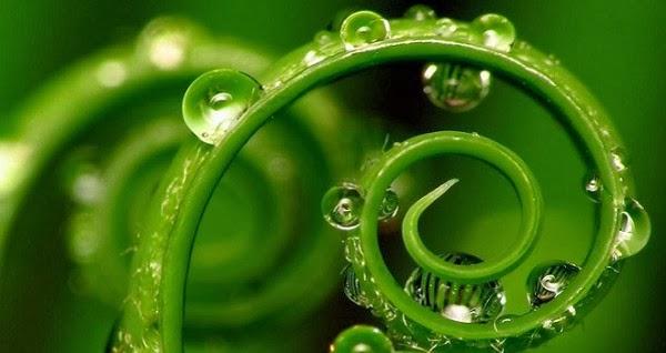 Las Plantas tienen Conciencia, son Inteligentes, se Comunican y Sienten