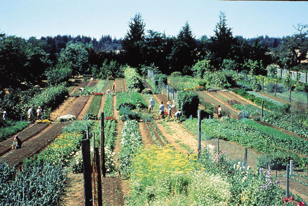 Temperate Climate Permaculture Biointensive Gardening and