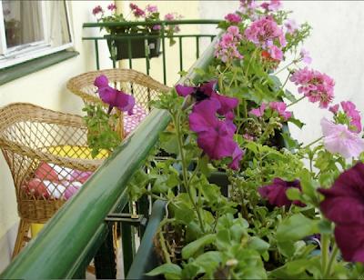 varanda com plantas