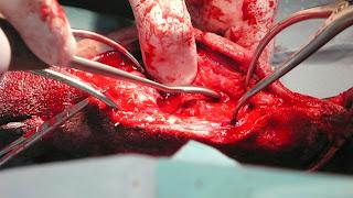 preparación lecho artrodesis perro