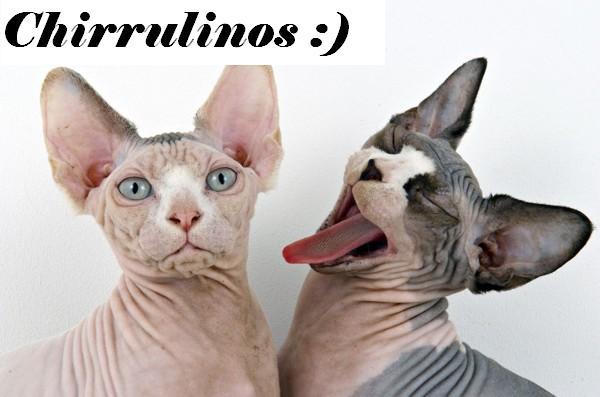 Chirrulinos :)