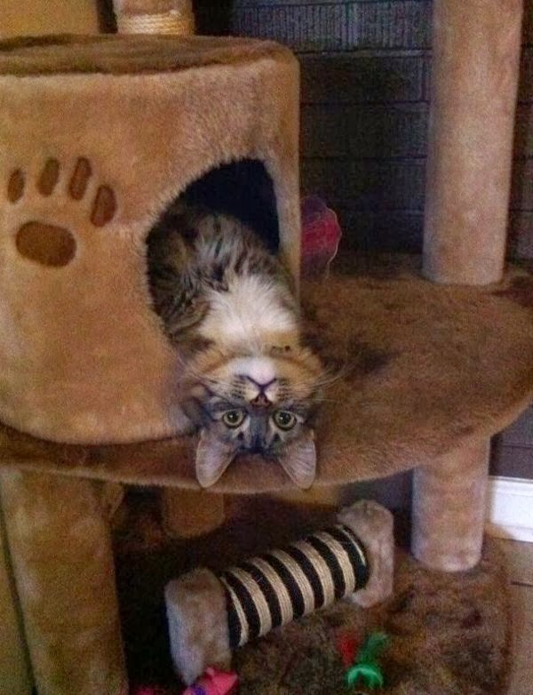 Funny cats - part 70 (35 pics + 10 gifs), funny cats pics, cats photos, funny pics, cat and kitten pics