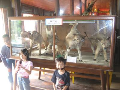 Tempat Objek Wisata Museum Rumah Adat Baanjuang Bukittinggi Sumatera Barat (Sumbar)