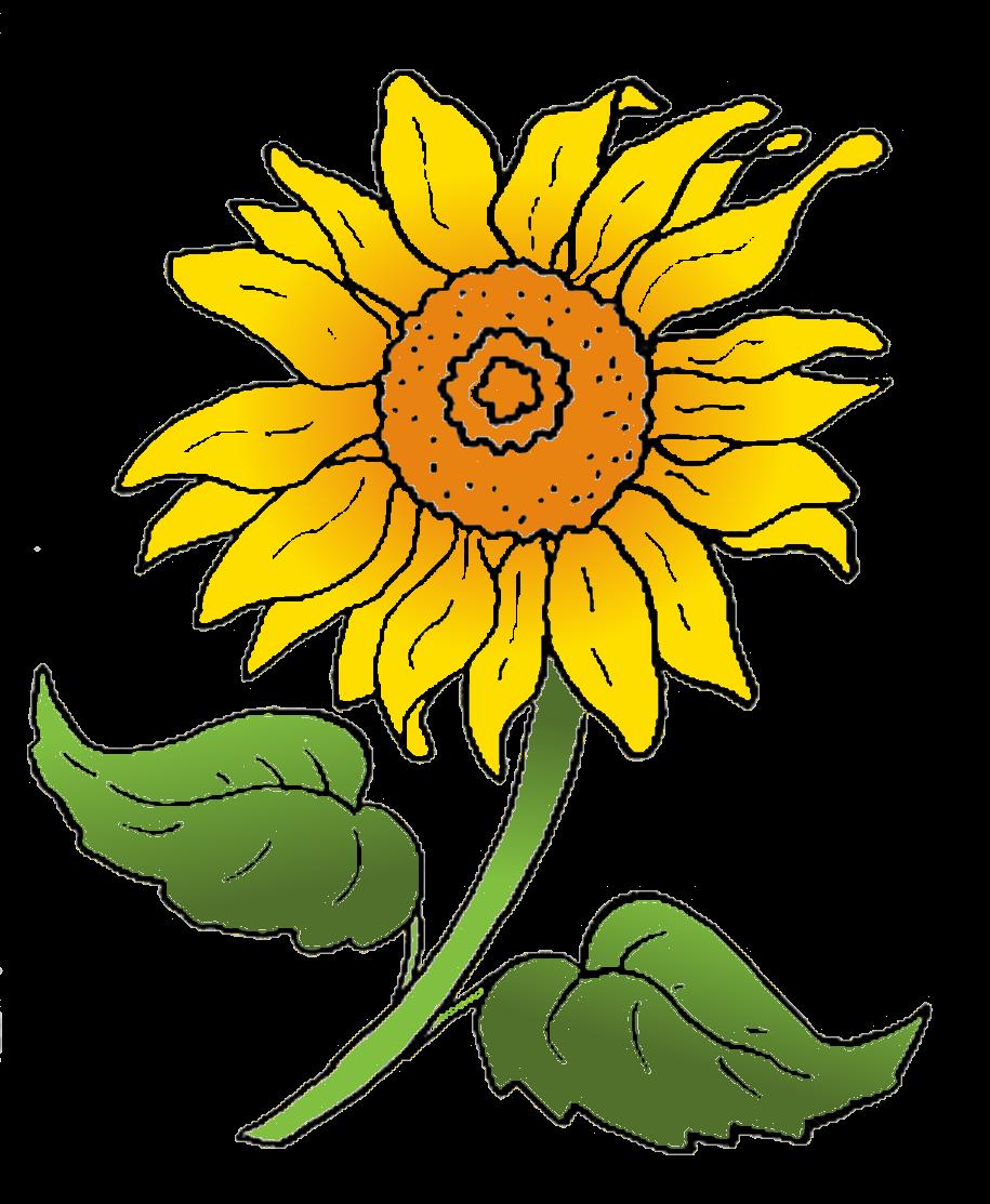 Groß Sonnenblumen Vorlage Zeitgenössisch - Entry Level Resume ...