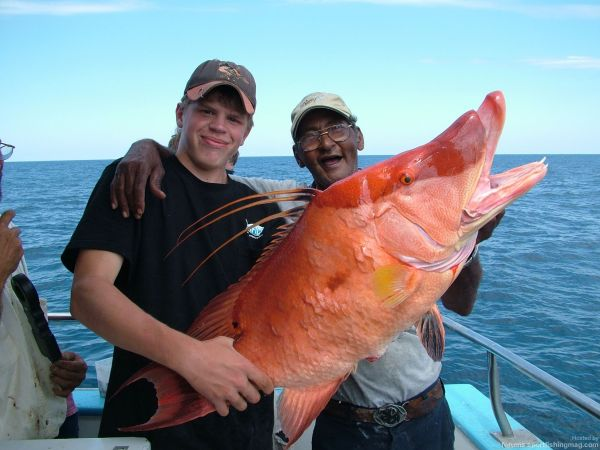 three tampa deep sea fishing tactics fishing tackle stuff