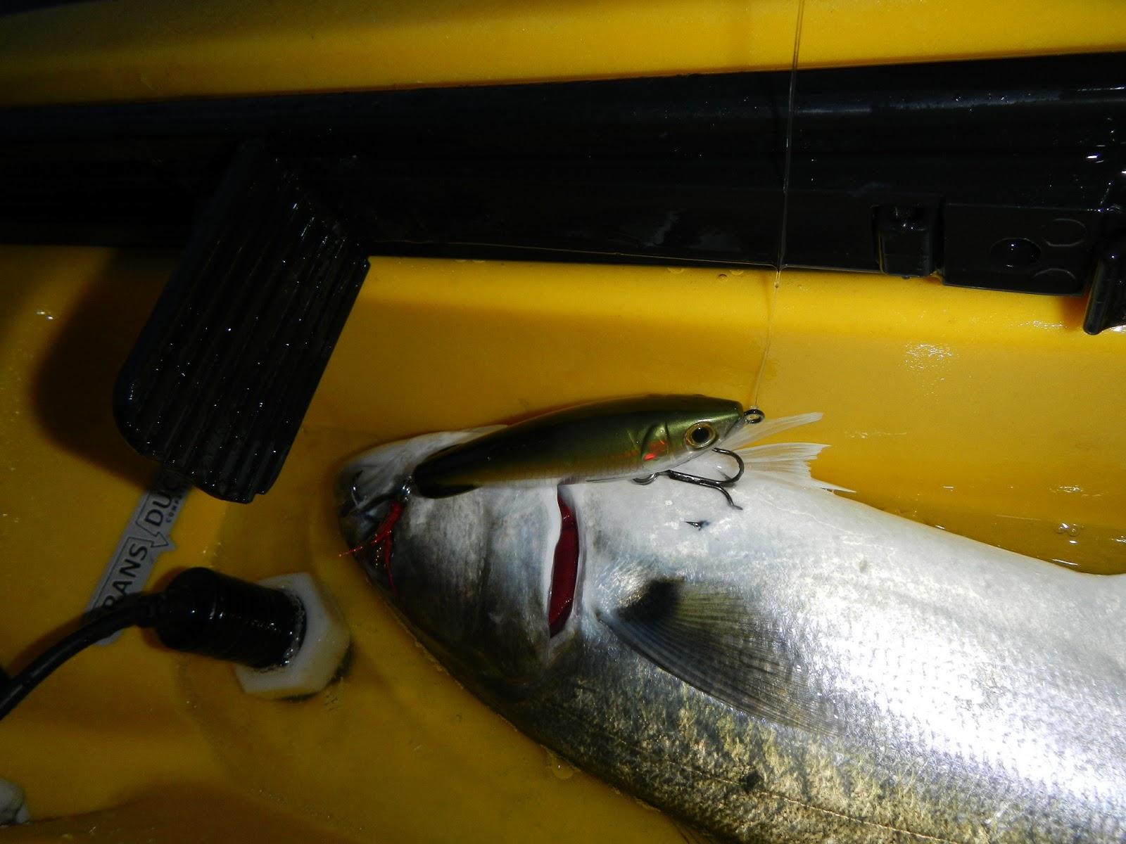 Makoslayer report rudee inlet 26apr13 for Rudee inlet fishing