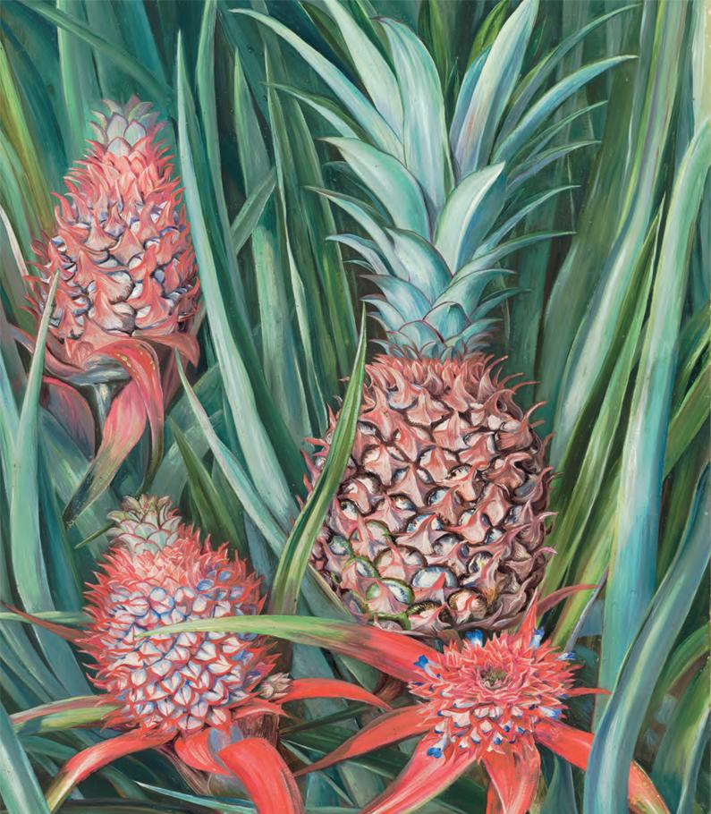 ilustración de una piña o ananas como también se conoce