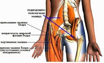 Мышцы вокруг тазобедренного сустава какой сустав соединяет верхнюю конечность с туловищем