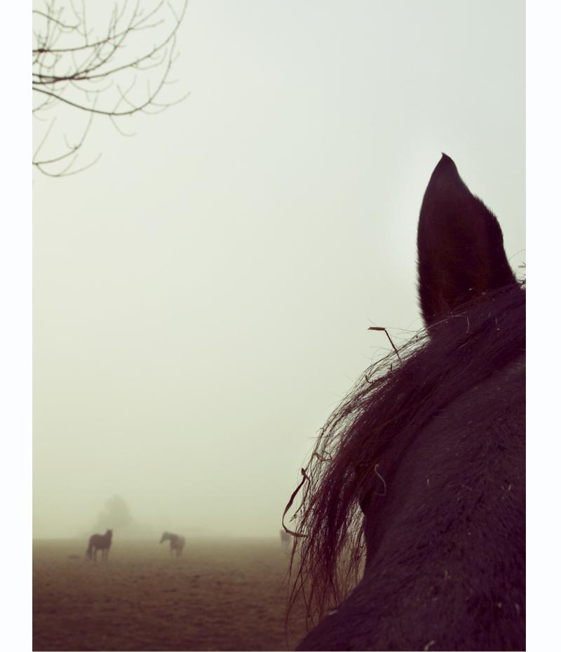 chevaux dans le brouillard