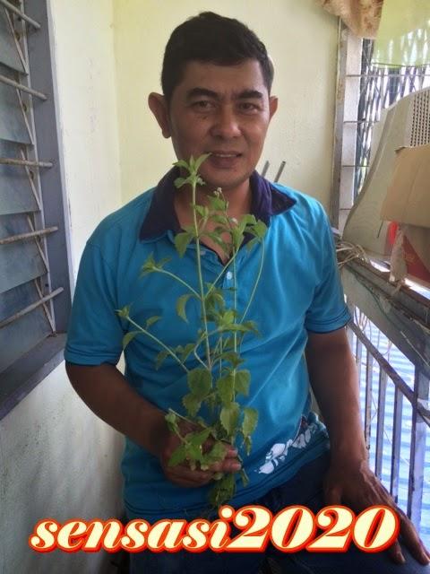 Petua dan herba KongsiBersamaNora
