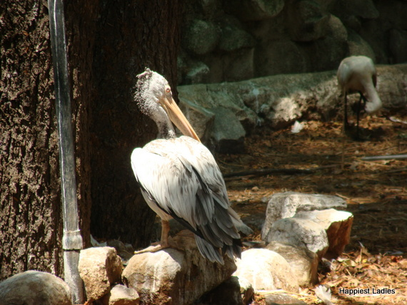 unique bird species mysore zoo