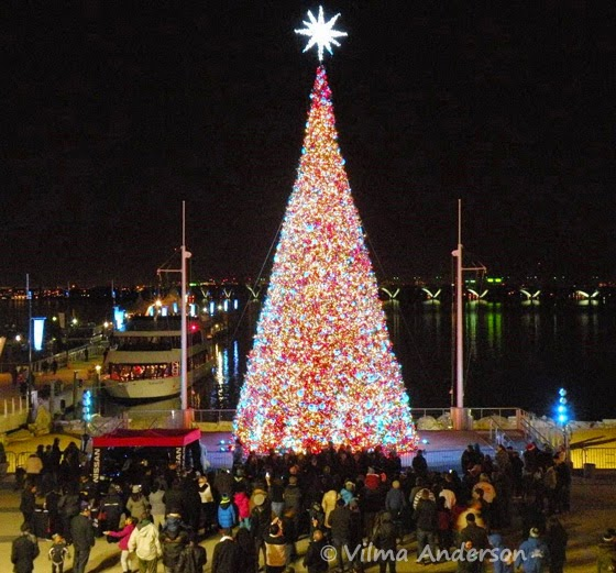 Christmas tree at the National Harbor - DC