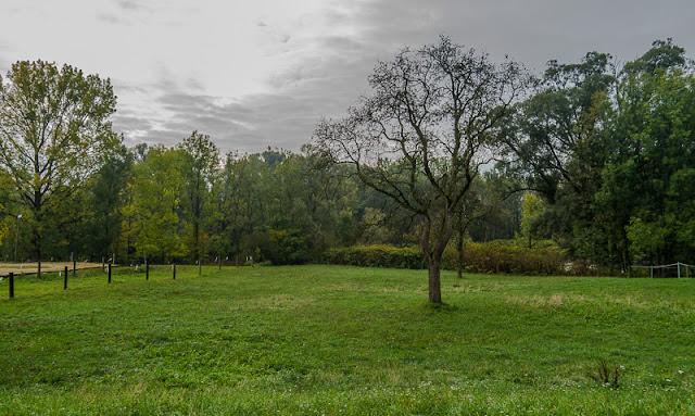 lot trees garden